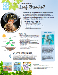 STEAM activity 1: How Does a Leaf Breathe? (Science)